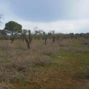 International Workshop Xylella
