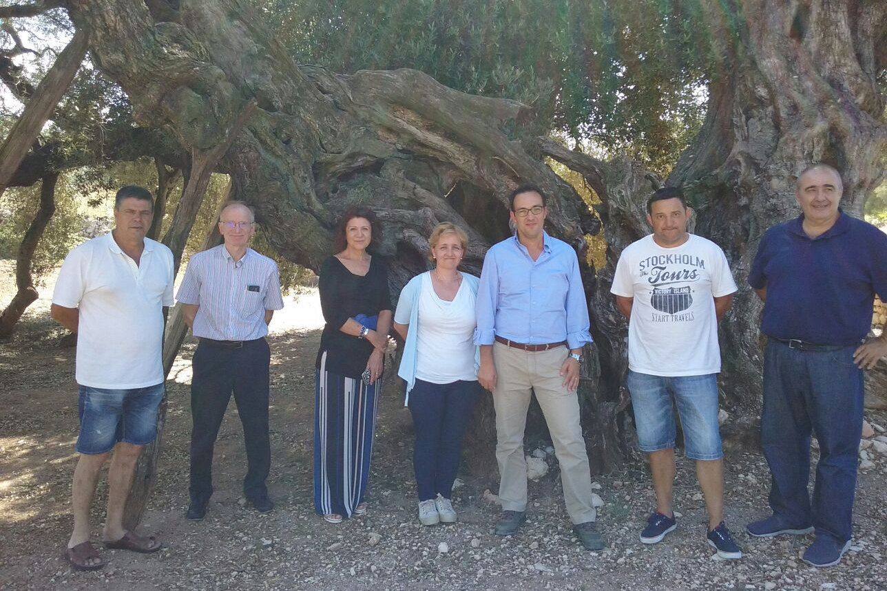 Dr Maria M. Lopez, Dr Ester Marco and Dr Antonio Vicent from IVIA visiting millennial olive trees with representatives of the growers association La Unio, in La Jana.